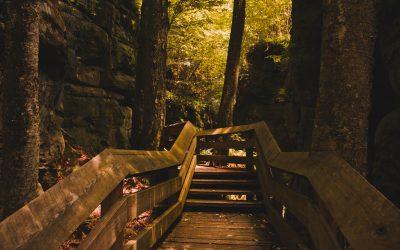 The Hidden Gem: Beartown State Park