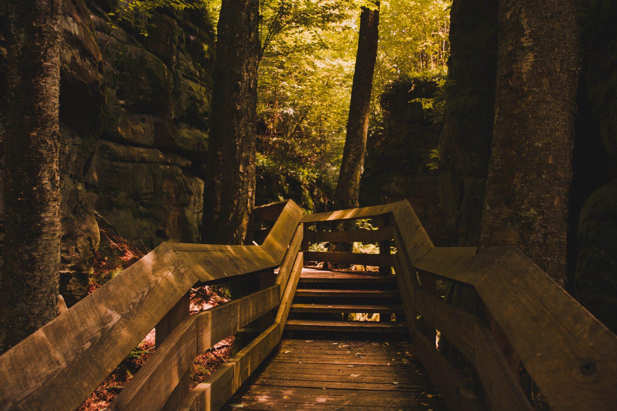 Boardwalk in Beartown State Park